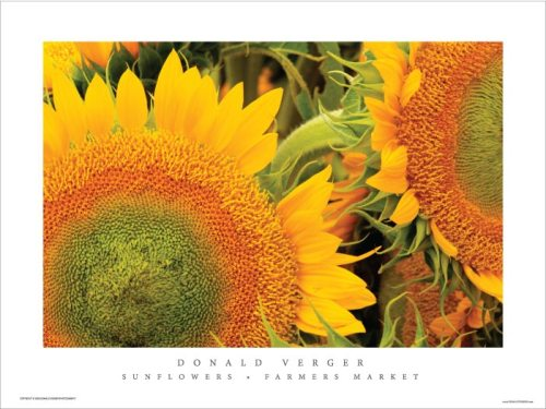 Sunflower_poster