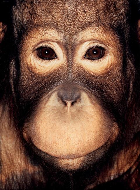 james mollison ape collection 1