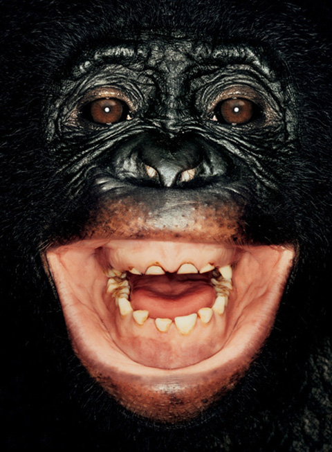 james mollison ape collection 2