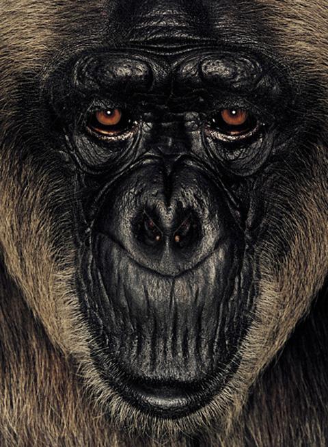 james mollison ape collection 3