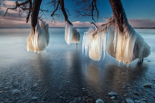 timothy corbin_frozen tree photography 1