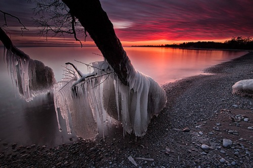 timothy corbin_frozen tree photography 2