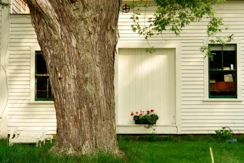 window box big tree