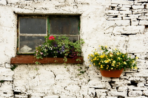 window box on weathered wall