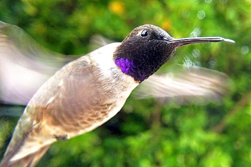 bird photo booth hummingbird