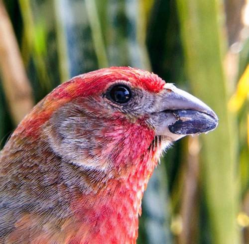 bird photobooth bird