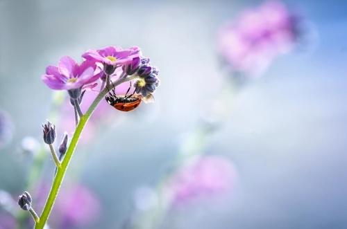 Bloas Maven ladybug photography 2