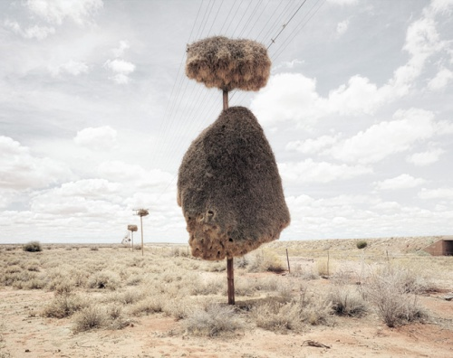 dillon marsh weaver bird nest 2