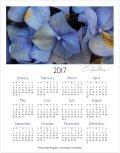 2017 hydrangeas one page calendar